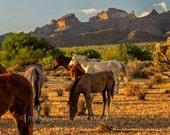 Salt River horses, Wild Horses, horse wall art large, horse wall art decor, southwestern decor, western decor, large canvas wrap, rustic