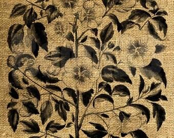 INSTANT DOWNLOAD Hollyhock Flowers Vintage Illustration - Download and Print - Image Transfer - Digital Sheet by Room29 - Sheet no. 762