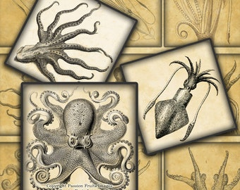"Antique Octopus and Squid digital collage sheet - 2"" Squares-- Instant Download"
