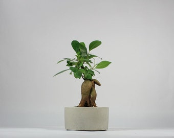 Mini Round Concrete Pot