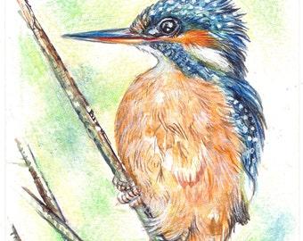 Original ACEO River KingfisherNOT a print ..original painting watercolor card drawing water