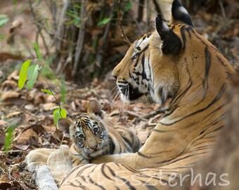 SNUGGLE BABY TIGER Photo Print, Baby Animal Photograph, Wildlife Photography, Safari Baby Nursery Decor, Safari Baby Shower, Tiger Cub