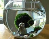 Lucky Cat Marimo Moss Balls Maneki Neko Nano Aquarium Terrarium / Cat Lover Gift