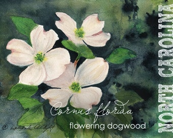 North Carolina, Watercolor ACEO, State Flowers, Flowering Dogwood, Cornus florida