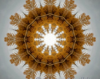Tree of Life (12x12 inch print) Abstract Kaleidoscope Imagery