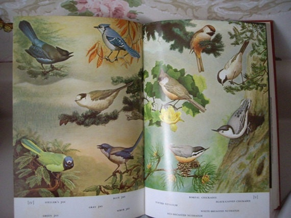 Book, Familar Garden Birds of America, beautiful color illustrations, great reference book