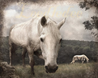White Horse - Textured Vintage Style Original Photograph - Cream White Grey Farm Farmhouse Distressed Home Decor