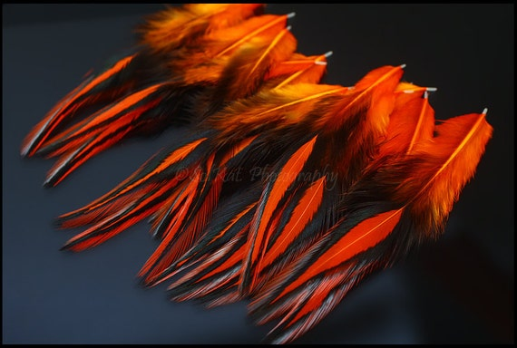 Orange Feathers Craft Supply Feathers Orange Black Feathers Orange Craft Feathers Laced Rooster Hair Supplies Hat Making Real Feathers, 12