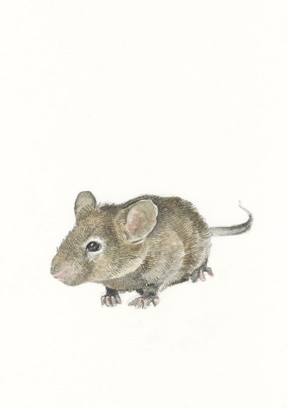 Mouse Pencil Drawing And Pencil Drawing