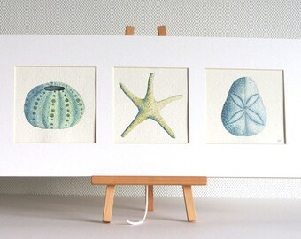 Sea urchin, sand dollar, starfish watercolour illustration painting triptych matted