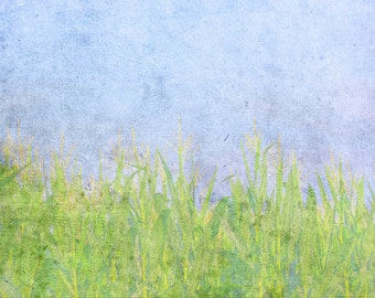 Cornfields Blue Sky Abstract Nature Landscape Summer - 11 x 14 art photography print by Dawn Smith