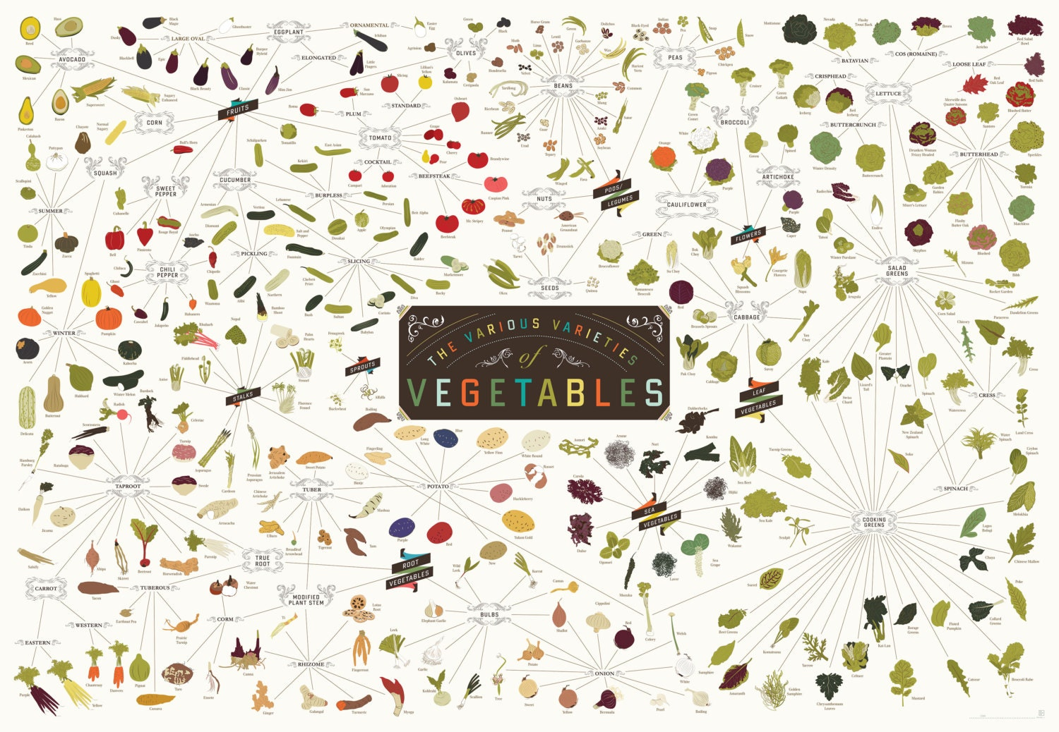 The Various Varieties of Vegetables Poster 39 x 27 Print