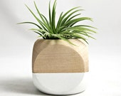 Geometric Air Plant Cube Planter // White - Natural Wood Colorblock - seaandasters