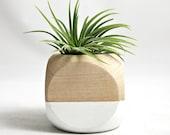 Mini Geometric Air Plant Planter // White + Wood (with air plant)