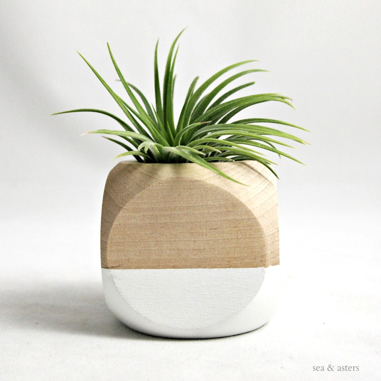 mini geometric air plant planter white wood with air