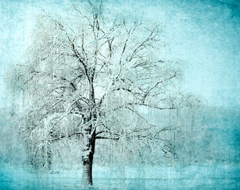 nature photography, still life, trees, turquoise, winter, willow tree, ethereal, landscape, girls, boys, wall decor, note cards, print