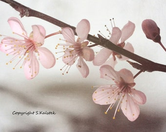Pink Spring Flower Photograph Tiny Pink Blossoms Romantic Floral Spring Wall Art Pink Gray 8x10
