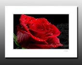 Red Rose Matted Print, flower photography, Ready for framing, red cubicle wall art