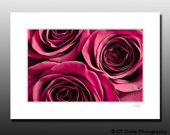 Red Rose Flowers, Matted Print, floral art print, Cubicle wall art, Ready for framing