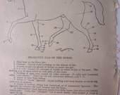 original pages - 1905 MEDICAL CHARTS from antique medical book - points, skeleton, horse