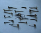 17 Hawthorn Thorns - Free Certified Shipping (US)