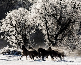 Snowy Silhouette - Fine Art Horse Photograph - Horse