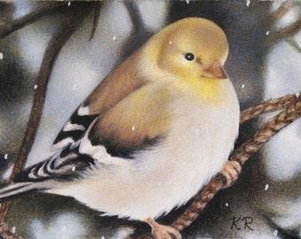 ACEO ART PRINT Finch bird snow