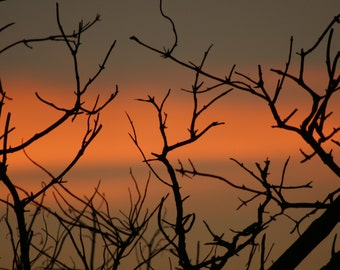 Branches at sunset: 5 x 7 photograph CHARITY DONATION