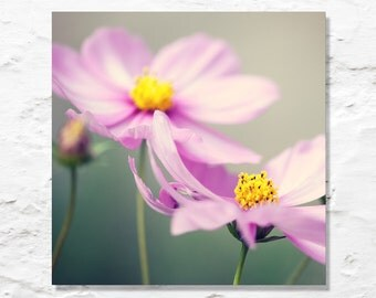 flower photograph pink cosmos fine art photography wall decor garden nature photo floral