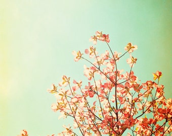"""Nature Photography, orange mint green turquoise nursery photo peach dogwood tree branches spring print teal wall 24x24 Photograph, """"Whimsy"""""""
