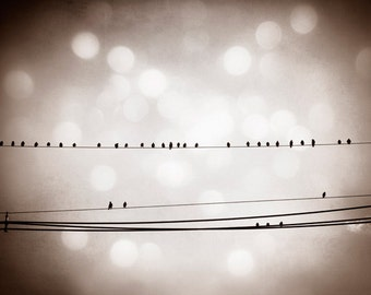 "Bird on Wire Photography - dark brown black and white print bokeh sparkle sparkly fine photo modern wall - 16x20 Photograph, ""Music Notes"""