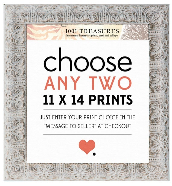 Any 2 Prints of Your Choice - 11 x 14 Inch