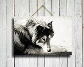 Majestic Wolf - Canvas print - Wolf decor - Wolf Dog - Wolf art - Wolf photography - Wolf photo - Native American