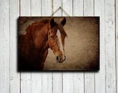 """The Paint - 16x24"""" canvas - Paint horse art - Horse art - Horse decor - Paint horse decor - Brown decor - Horse decoration"""