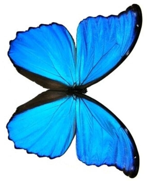 4 laminated butterflies custom listing