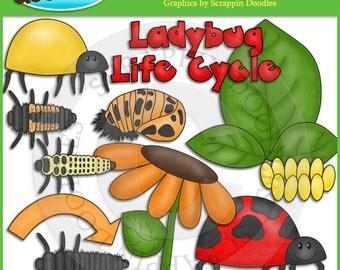 Ladybug Life Cycle Clip Art