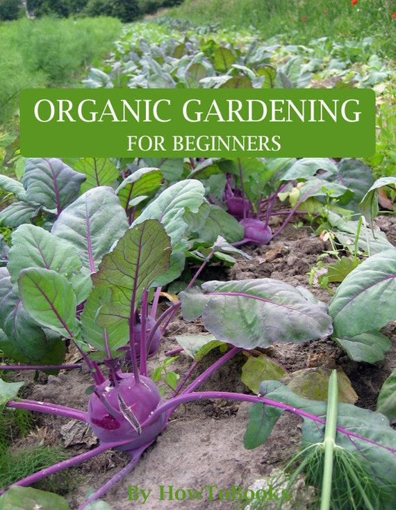Organic Gardening For Beginners Everything You Need To Know To