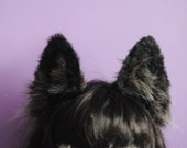 dark brown wolf ears
