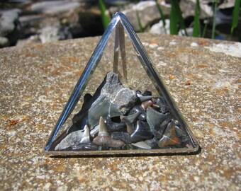 """Sharks Teeth 3"""" Pyramid"""