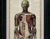 Human Anatomy 02 Vintage Illustration on Book Page Art Print (aca002)
