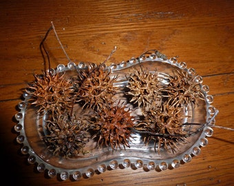 13 Witch's Burrs for Protection and Spells