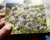 Recycled Blank Winter Photo Note Cards of Vancouver Island: Support Lyme Disease Foundation