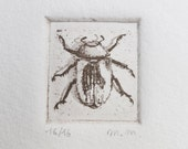 Real size beetle etching