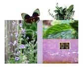Rosemary Mint Drawer Sachet Scented Refreshing Herb Home Fragrance Gift Stocking Filler Card Stuffer Modern Design Home Decoration