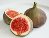 Organic Heirloom RARE 50 Seeds Sweet Common Fig Fruit Tree Seeds African Fig Tree Ficus carica Bush Shrubs F55