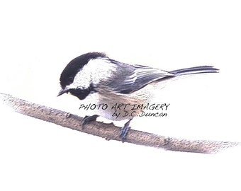 "Wild Bird Series Chickadee Print 5"" x 7"""