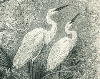 Crane print heron stork wading bird print : Antique 19th century engraving old book plate natural history bird art print gift for bird lover