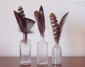 Feather collection in vintage bottles.