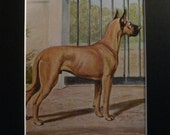 1958 Edwin Megargee Great Dane dog mounted vintage plate print Unique Christmas Birthday Thanksgiving Good luck dog lover rare Xmas gift