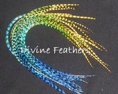 """REAL Feather Extensions 9""""-12"""" Long Grizzly Feather Extensions by Divine Feathers Kit Beads Whiting Feathers"""